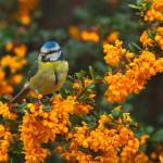 This is a group of pics I took yesterday in my garden at Stanley Common. If does…
