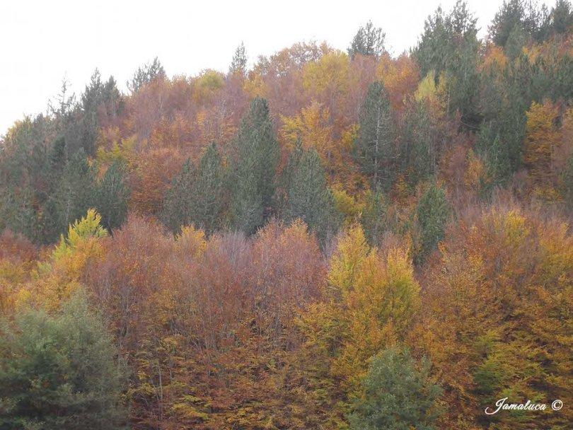 sfumature d'autunno