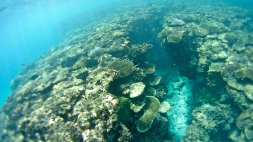 Isole Mamanuca e Yasawa - Snorkeling