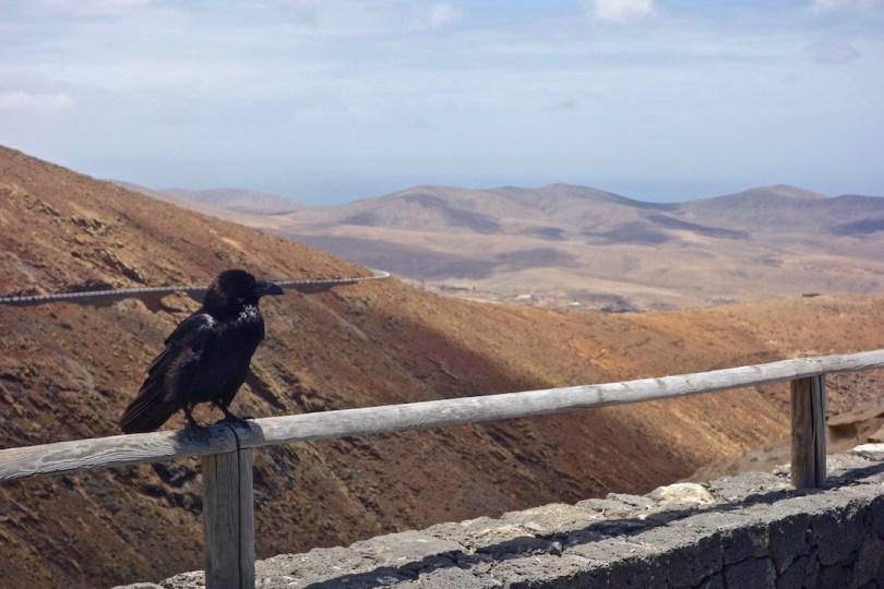 visita di Fuerteventura