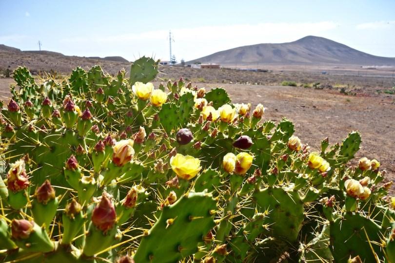 Fuerteventura insolita