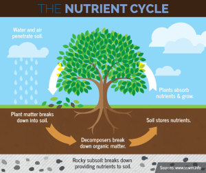 Lesson 10: What's In Soil? with Nutrition • Illinois Farm