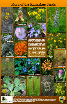 Flora of the Kankakee Sands