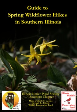 Guide to Spring Wildflower Hikes in Southern Illinois