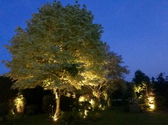 Garden Lighting, Hanham, Essex, Big Tree