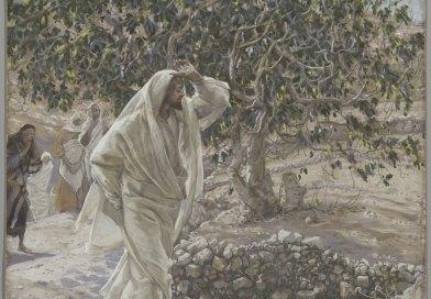 The Accursed Fig Tree, by James Tissot, c. 1886-94. Brooklyn Museum, New York, New York, United States. Via IllustratedPrayer.com