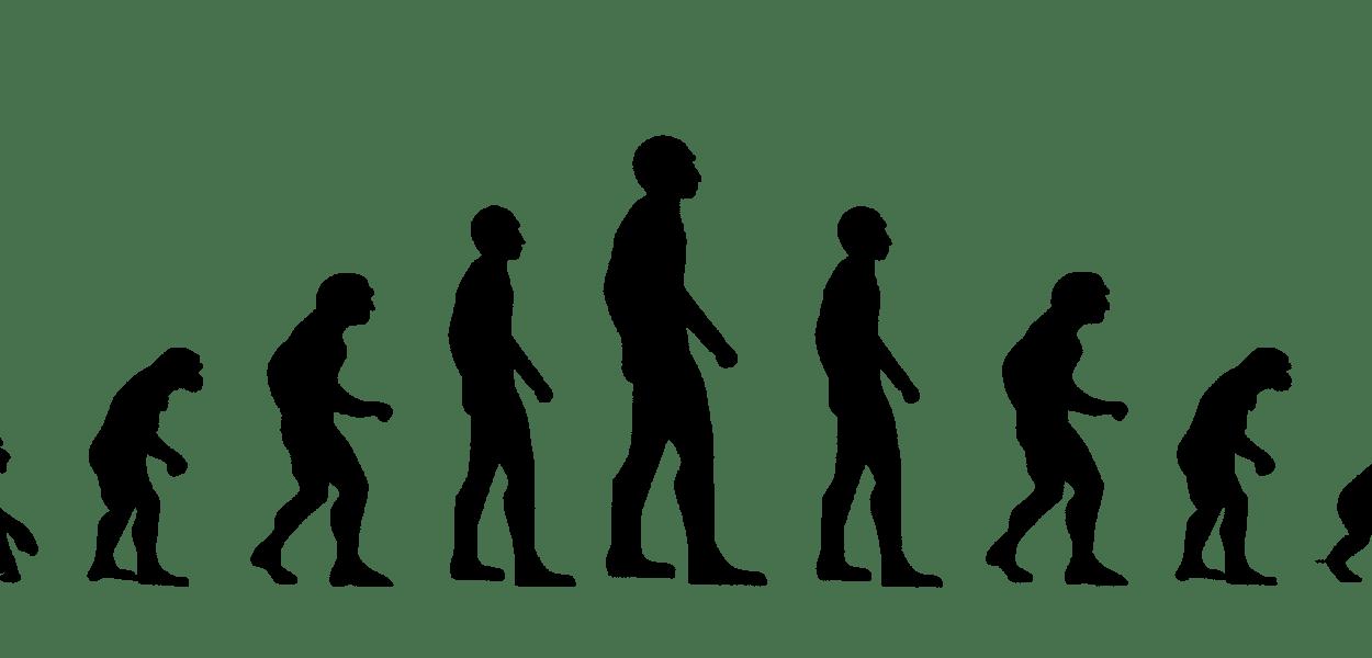 evolution, development, forward