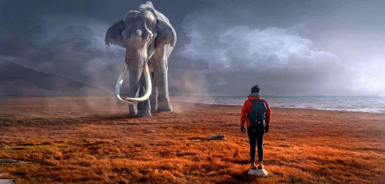 fantasy, elephant, man