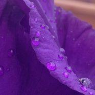L'iris di Piumino fa tanta atmosfera...