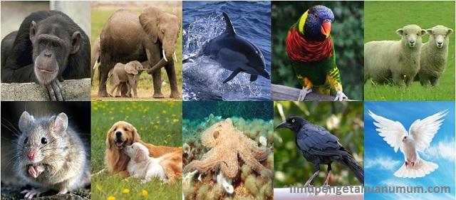 10 Binatang Terpintar di Dunia