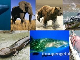 Daftar 10 Hewan Terbesar di Dunia