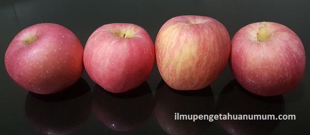 Kandungan Gizi Buah Apel dan Manfaat Buah Apel bagi Kesehatan
