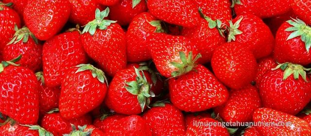 Kandungan Gizi buah Stroberi (Strawberry) dan Manfaat Stroberi bagi kesehatan