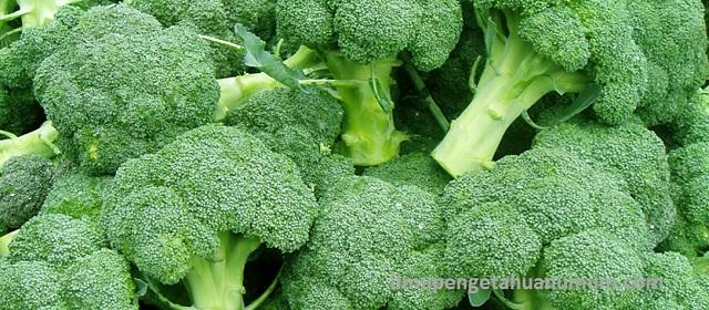 Kandungan Gizi Sayur Brokoli dan Manfaat Sayur Brokoli bagi Kesehatan