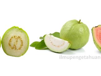 Kandungan Gizi Buah Jambu Biji (Guava) dan Manfaat Jambu Biji bagi Kesehatan