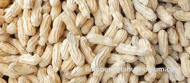 Kandungan Gizi Kacang Tanah dan Manfaat Kacang Tanah bagi Kesehatan
