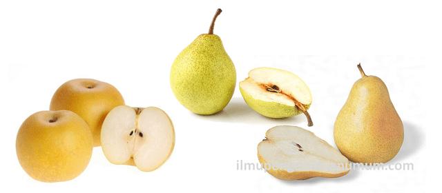 Kandungan Gizi Buah Pir (Pear) dan Manfaat Buah Pir bagi Kesehatan