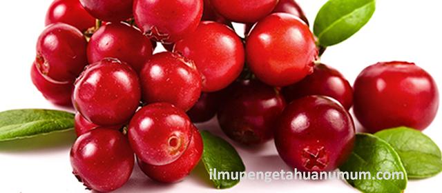 Manfaat Cranberry (Kranberi) dan Kandungan Gizi / Nutrisi Cranberry