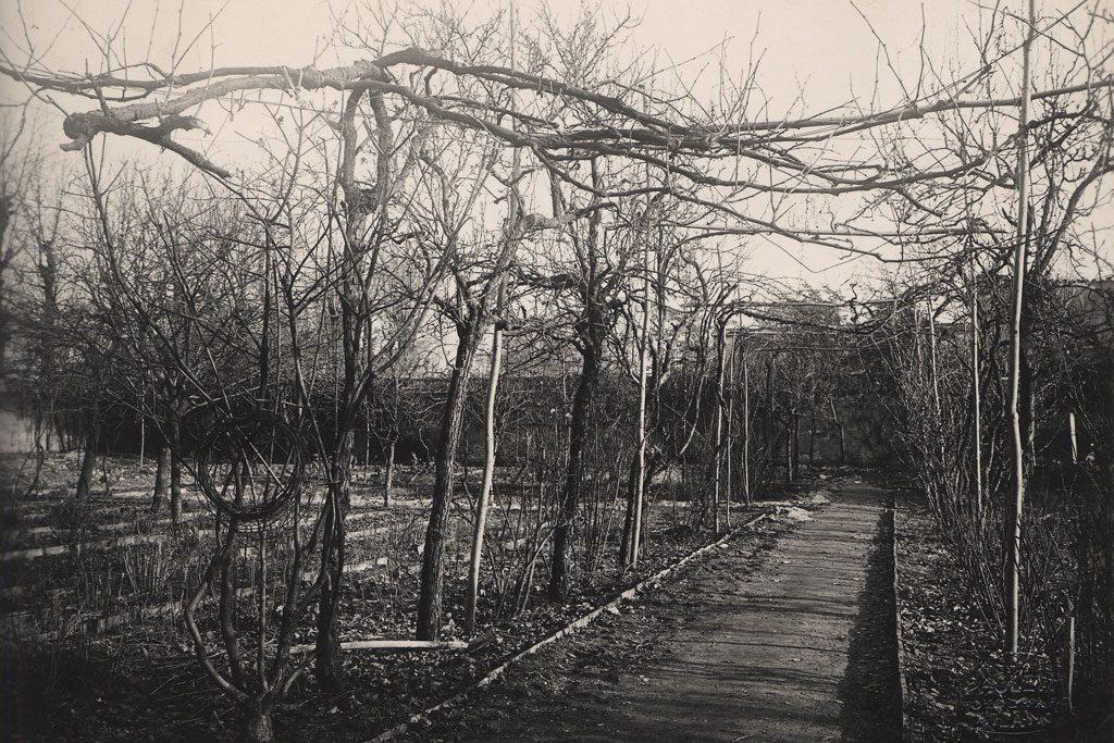 la vigna di leonardo nel 1920