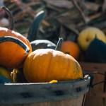 Welke groenten brengt oktober? Hier een overzicht van seizoensgroenten van oktober. Groenten van het seizoen zijn goedkoper, smaakvoller en vol met vitaminen en mineralen.