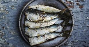 pesce ai bambini