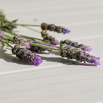 lavender ingredient - cbd balms, creams & topicals