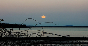 666-moonrise-moon-yellow-fall-twigs-silhouette-maine