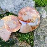Ammonite del Madagascar