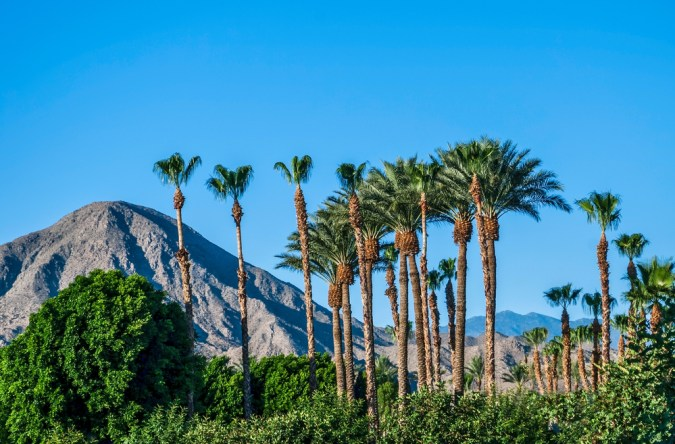 day trips from palm springs