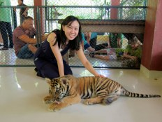 Tiger Chiangmai