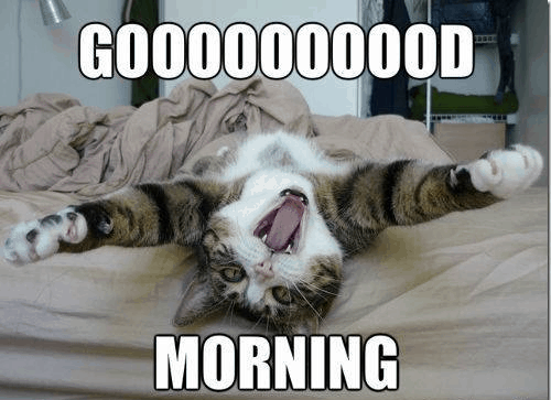 Funny Meme For Him : Funny pussy cat way of saying good morning for him and her meme