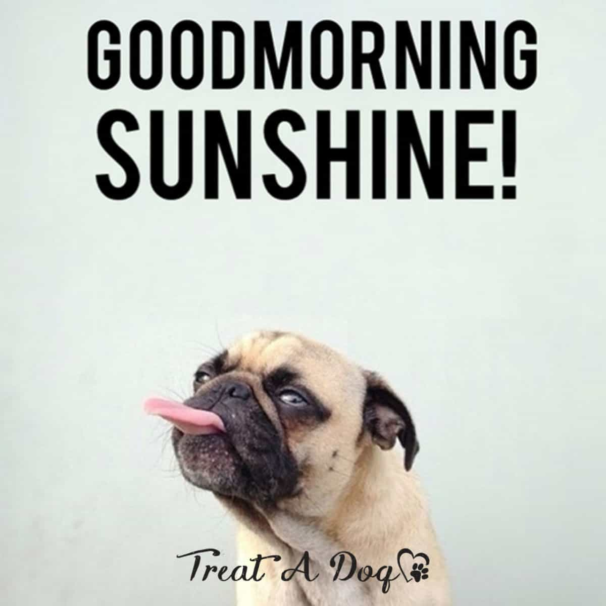 good morning sunshine meme for him and her?ssl=1 good morning sunshine meme for him and her ilove messages