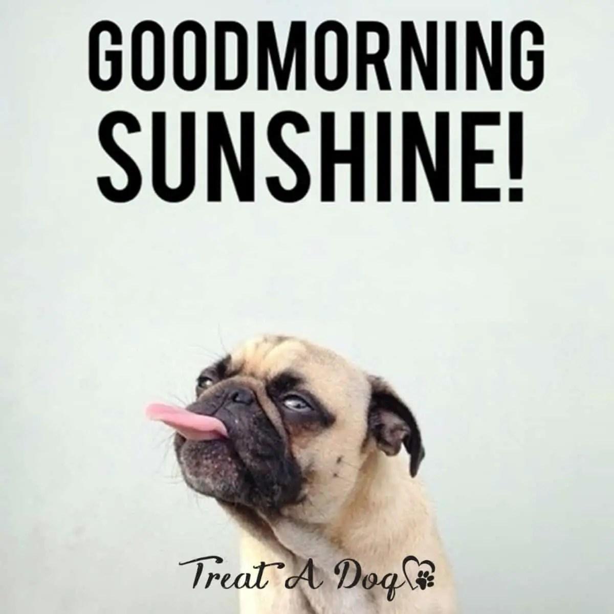 Cute Good Morning Memes