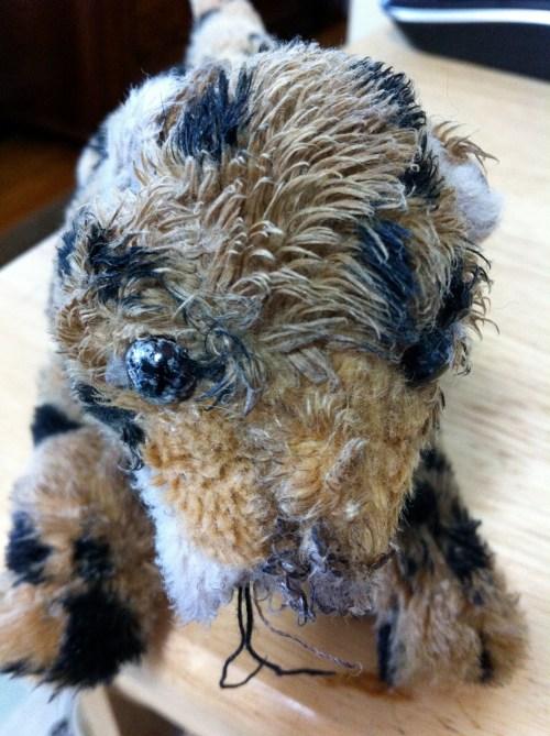 A Pug's Friendship With Telus