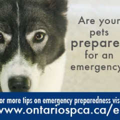 Emergency Preparedness Month – Ontario SPCA