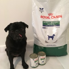 My Journey Continues- A Pug's Story to Healthy Weight Loss