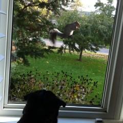Fall – The Return of my Nemesis!