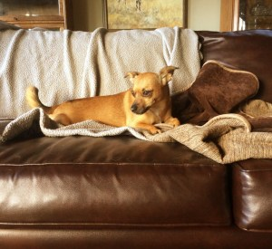 Pet Rescue Stories - After They Go Home - Vinnie's Story