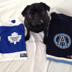 CFL & NHL Tog Pet Wear by Karush