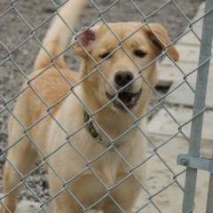 Edie's Ontario SPCA Pet of the Week