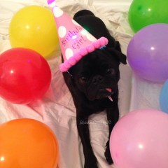 My 5th Barkday!
