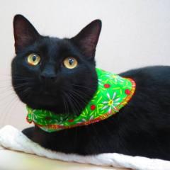 Edie's Pet of the Week – Ontario SPCA