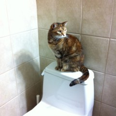 Senior Pets – Toilet Misses – Outsmarting a Cat
