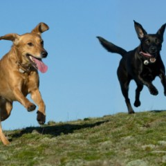 Dog Park Etiquette – The Good, The Bad & The Furry