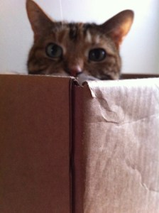 Lily in box