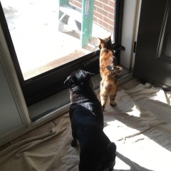 Renovations with Pets – Week 3