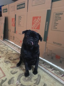Renovations with Pets
