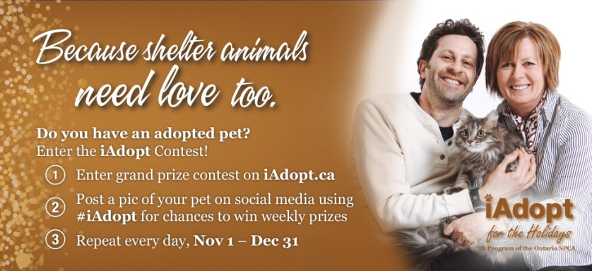 iAdopt Ontario SPCA 2015 Campaign