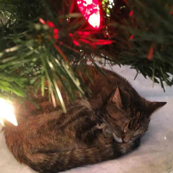 Merry Christmas from Lily cat