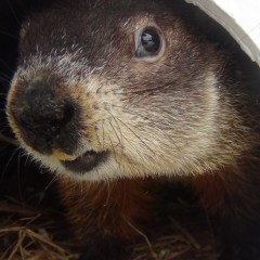 Interview with Groundhog Shubenacadie Sam
